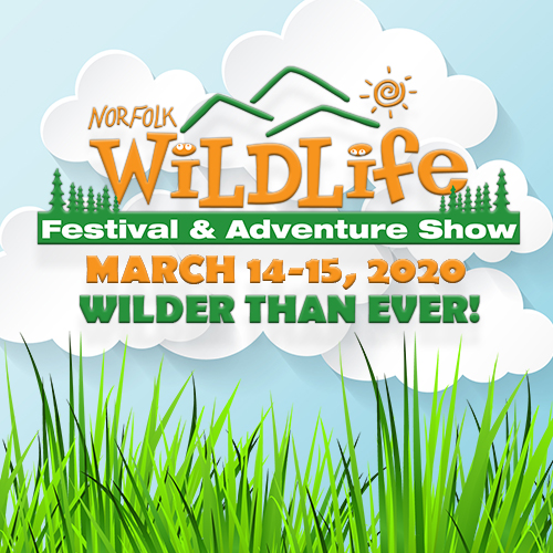 Wildlife Festival